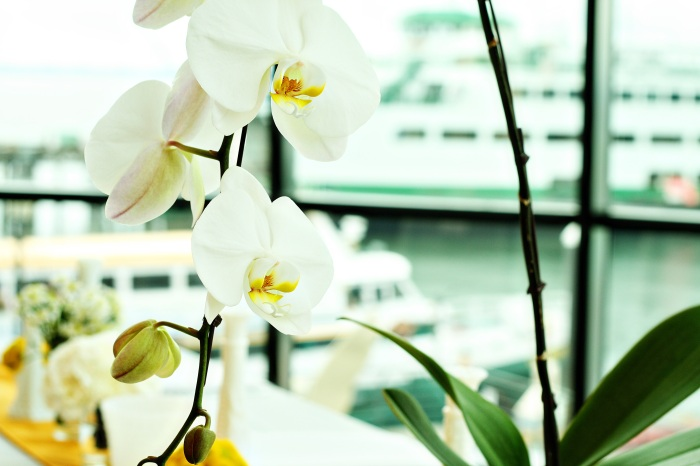 Orchids:  I love the Alaskan Ferry in the backgound!